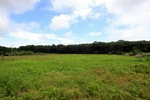 Best Priced! 78 Spring Close Hwy, 19+ Acres for Private Estate, Horse Farm, Working Farm Nr Village of East Hampton! One of Last Large Plots w/ Development Rights Has House and Barn